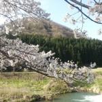 天空だより 4月号 No.3【桜満開です】