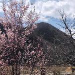 天空だより 4月号 No.1【桜が咲き始めました】
