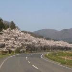 天空だより 4月号 No.2【桜が満開です】