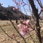 天空だより 3月-2【春めいてきました】