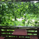 天空だより 8月-2【ゴーヤのカーテン、柿渋作り】