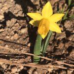 天空だより 3月-2【春の花の芽が出てきています】