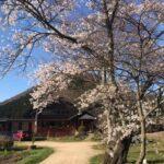 天空だより 4月-1【桜満開】
